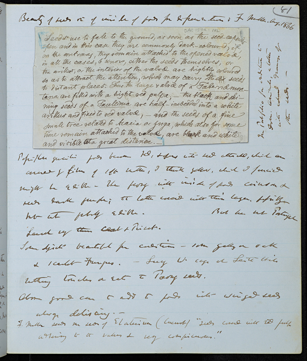Digital composite of letter from Müller to Darwin, 2 Aug 1866, in Darwin's experimental notebook