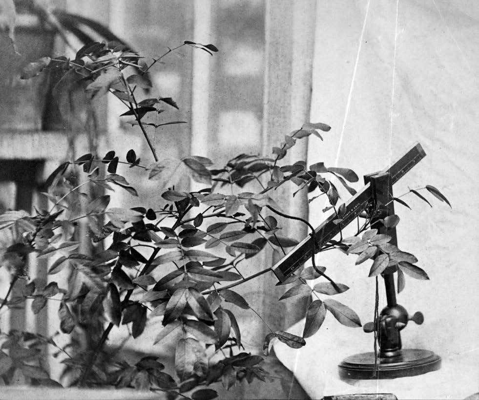 Photograph of experiment on movement in plants
