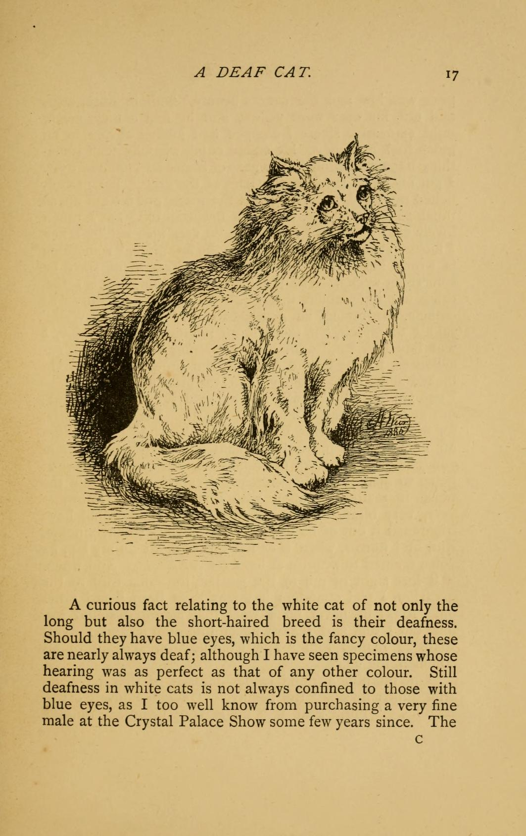 Our cats and all about them: their varieties, habits, and management, and for show, the standard of excellence and beauty by Harrison Weir, p. 17
